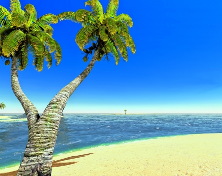Beach and palms Stock Photo - 14324747