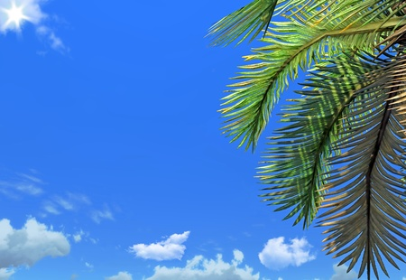 Palm brunch and sky photo