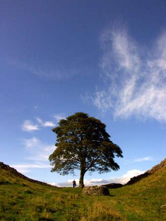 プラタナス: Man standing in Sycamore Gap, Hadrians Wall, Northumberland 写真素材
