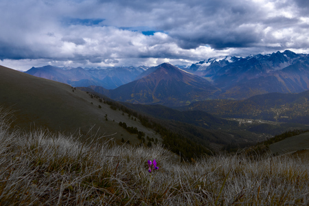 Lonely purple flower with a background of mountains and thunder clouds Stock Photo