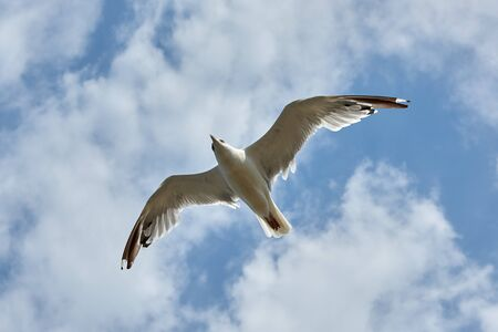 Seagull flying on a background of blue cloudy sky Фото со стока