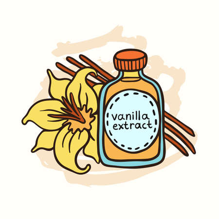 Doodle vanilla extract in bottle on white background. Natural vanilla spice. Exotic asian spice for dessert or parfum industry vector illustration.