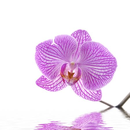 reflection for beautiful orchid photo