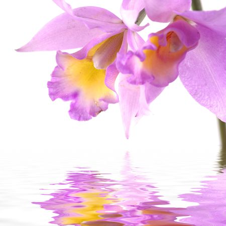 Beautiful orchid reflects in water  photo