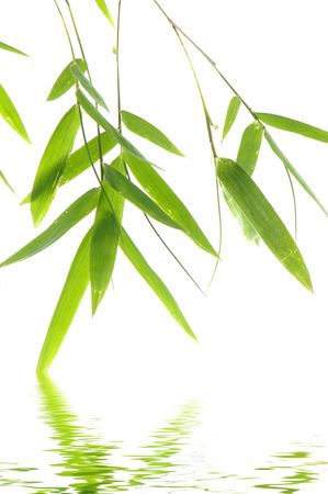 bamboo leaf with reflection Stock Photo