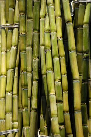 sugarcane background Stock Photo - 5007882