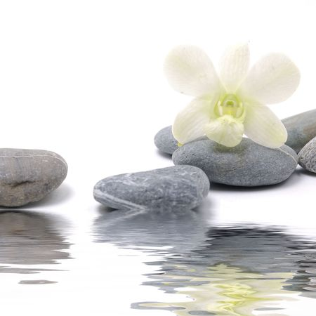 Reflection of orchid and pebbles