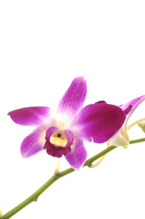 Beautiful purple orchid Stock Photo - 5928439