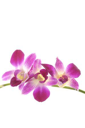 Beautiful purple orchid Stock Photo - 5928442