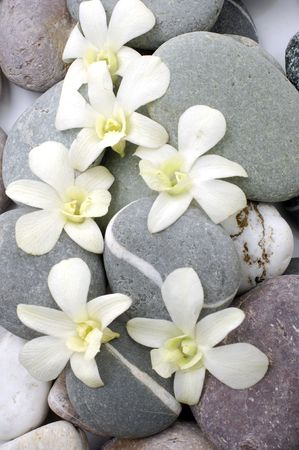 Still life zen stone with bright orchid flower photo