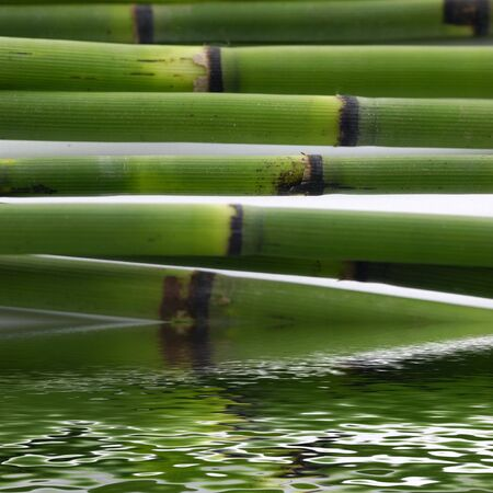 Bamboo stem with reflection photo