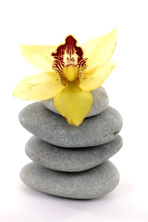 Beautiful orchid with zen stones photo