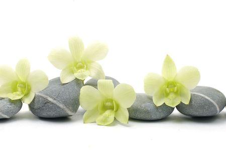 beautiful orchid flower with zen stones 版權商用圖片