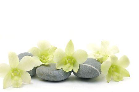 beautiful orchid flower with zen stones