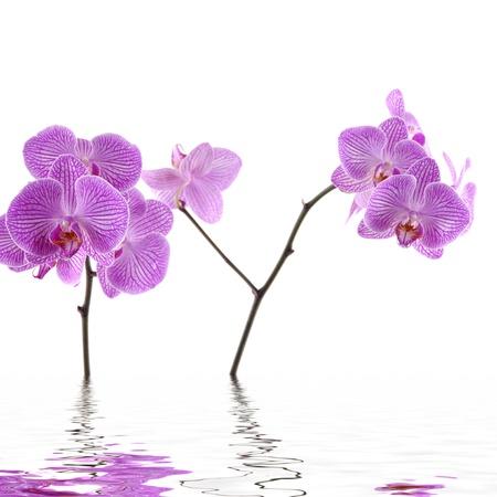 Spa pink flower