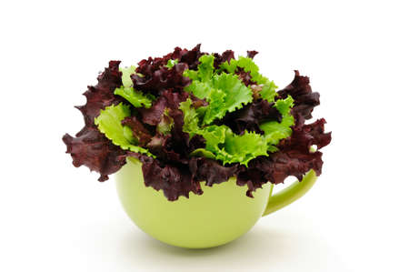 Lettuce and Lolo Rosso in a bowl on a white background Standard-Bild