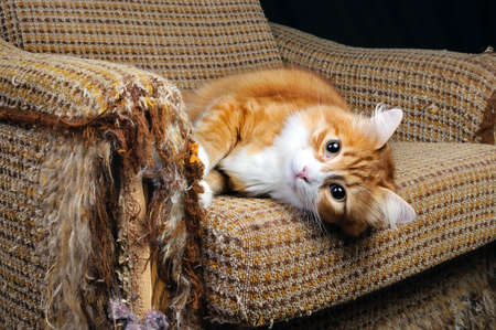 As our beloved pets are destroying the upholstery on the furniture