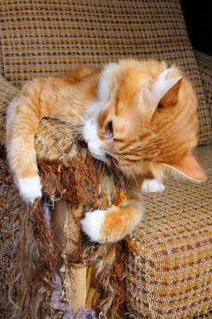 old furniture: As our beloved pets are destroying the upholstery on the furniture