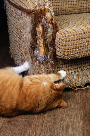 jag: As our beloved pets are destroying the upholstery on the furniture