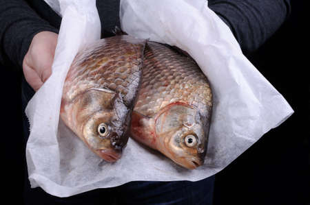 crucian carp: Man holding fresh crucian carp close-up on a folded paper Stock Photo