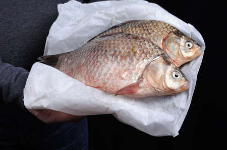 limnetic: Man holding fresh crucian carp stacked on paper