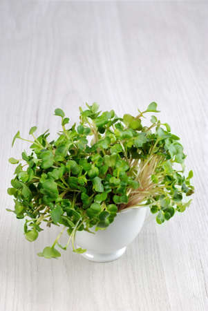 Sprouted radish sprouts in a cup.  Organic micro greens for vegan cooking. Healthy food and diet concept.