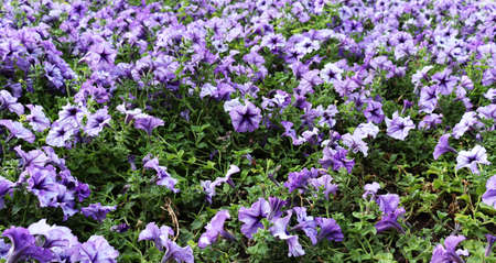 Beautiful delicate flower wallpaper. Blue romantic flowers background
