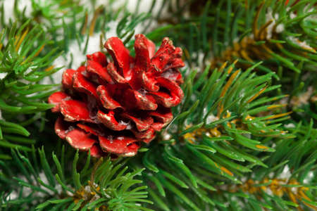 branche sapin noel: Green Christmas tree branch with a pinecone