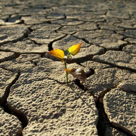 열이 오래 살아남은 토양에 금이 간다.