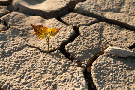 Cracked by the heat long lifeless soil Stock Photo - 8425022