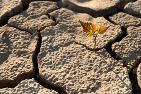 Cracked by the heat long lifeless soil Stock Photo - 8425013