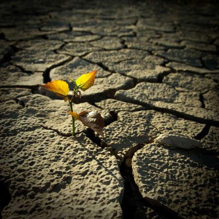 Door de warmte lang levenloze bodem gekraakt Stockfoto