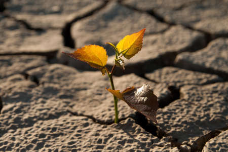 Cracked by the heat long lifeless soil Stock Photo - 11194972