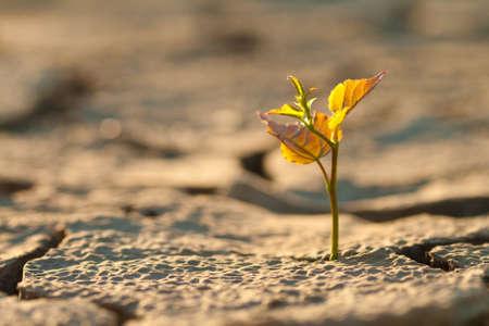 sequias: Agrietado por el calor sin vida del suelo a largo Foto de archivo