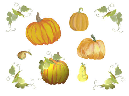 Pumpklins and vines isolated on white photo