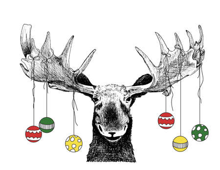 Funny Chrismas Moose scene or card with ornaments hanging from Antlers Stock Photo