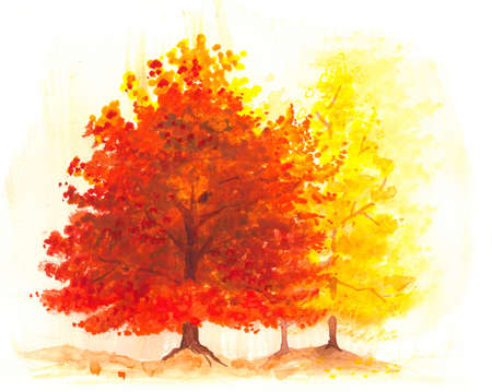 artworks: autumn tree watercolor painting, landscape of fall maple tree or oak tree in bright vibrant orange, yellow and red colors for leaves, autumn foliage scenery