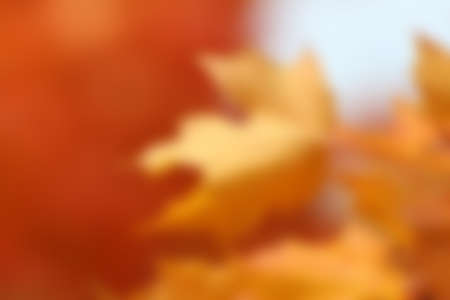 blurred orange maple leaves, blank autumn design for adding your own typography text or image for fall backgrounds or Thanksgiving Archivio Fotografico