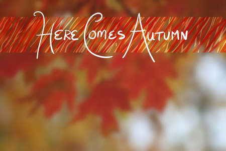 seasonal greeting: Autumn background of blurred leaves with white typography letters in seasonal greeting of Here Comes Autumn text