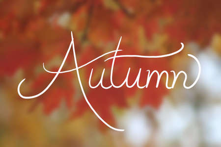 autumn background design, blurred red yellow and orange maple leaves with the word Autumn in white typography handwriting, hand written letters