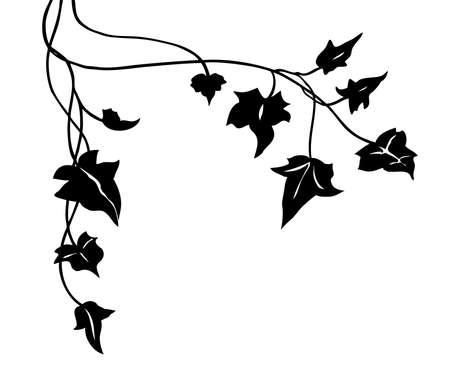 bluszcz winorośli sylwetka wektor, elegancki czarny kwiatowy ozdobny obramowanie lub element projektu narożnika liści w ładnym układzie, ozdoba zaproszenia ślubne na białym tle