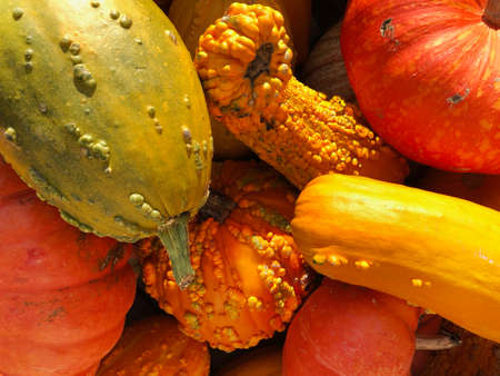pile of pumpkins gourds and squash produce in colorful autumn orange yellow green and red colors, thanksgiving and halloween season harvest image