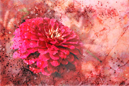 Gorgeous artsy flower background illustration with paint spatter and vintage grunge texture design, red and pink color zinnia flower