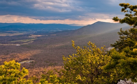 ridge: View of the Shenandoah Valley and Appalachian Mountain through pine trees before sunset, from Massanutten Mountain in George Washington National Forest, Virginia   Stock Photo