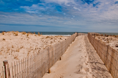 Path to the beach at Cape Henlopen State Park, Delaware   photo