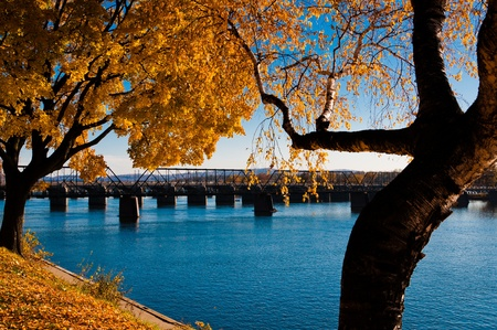 pa: Autumn trees along the Susquehanna River in Harrisburg, PA  Stock Photo