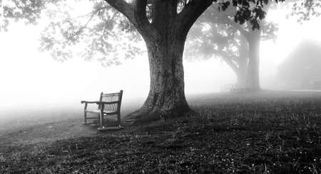 Trees and benches in fog, Shenandoah National Park, Virginia   photo