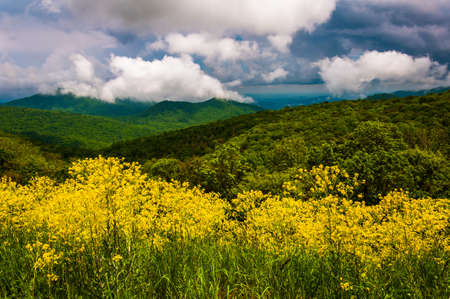 Spring view of the Appalachians from Skyline Drive in Shenandoah National Park, Virginia  photo