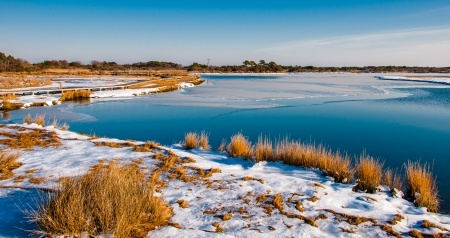 Snow covered marsh at Assateague Island National Seashore, Maryland. photo