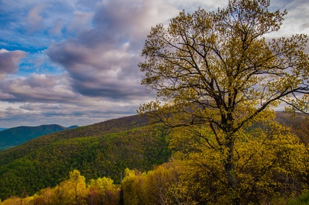stomy: Colorful tree on Skyline Drive in Shenandoah National Park, Virginia.